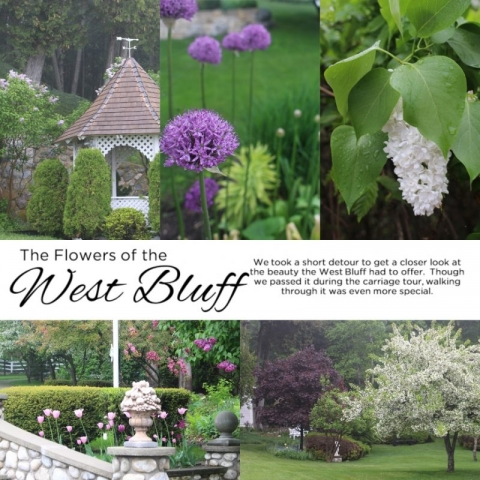 Flowers of the West Bluff - Simple