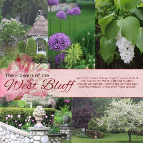 Flowers of the West Bluff - Decorative: Summer Gardens Blendables and Paint by DesignerDigitals